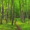 This lush, green forest trail leads you along the Lakeshore Trail at Pictured Rocks National Lakeshore.
