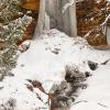 Munising Falls in winter 1:3 8x24, 12x36